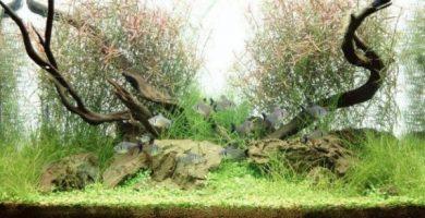 Decoracion de acuarios